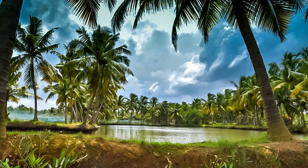 Col Saheb Island Water channels and palm trees