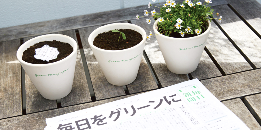 Three pots growing from the Newspaper