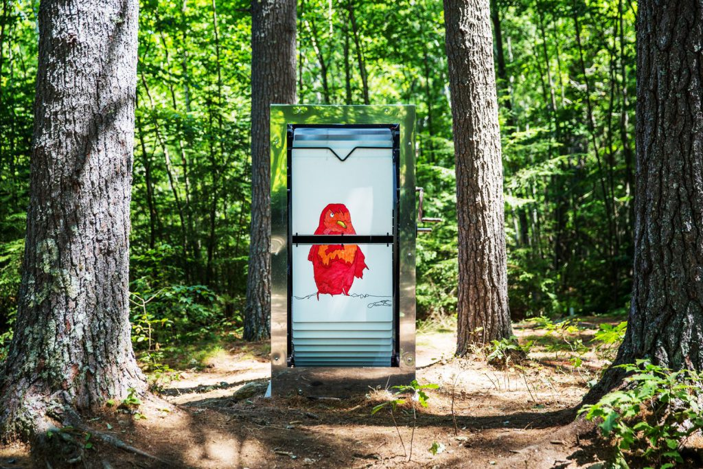 new-hampshire-woods-giant-flibook-red-bird-daytime