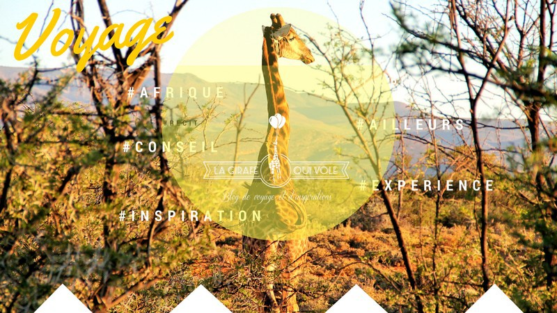Blog de la Girafe qui Vole