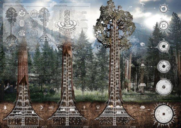 visuels de grattes-ciels de sequoia geants