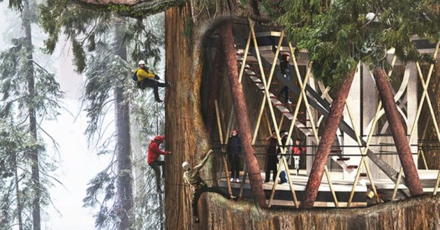 Personnes grimpants un sequoia